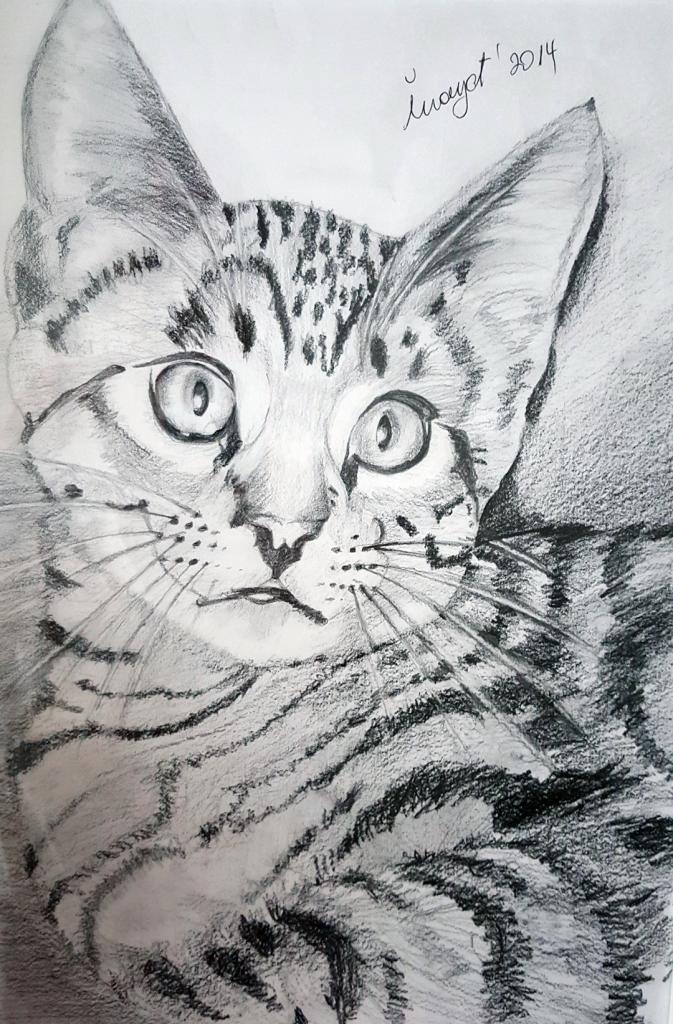 Yavru Kedi - 35x35cm Karakalem Çerçeveli